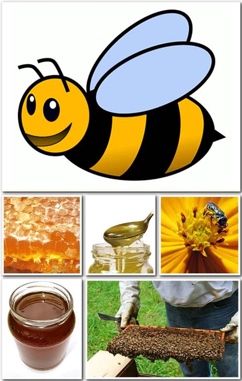 Organik Bal Üretimi ve Satışı